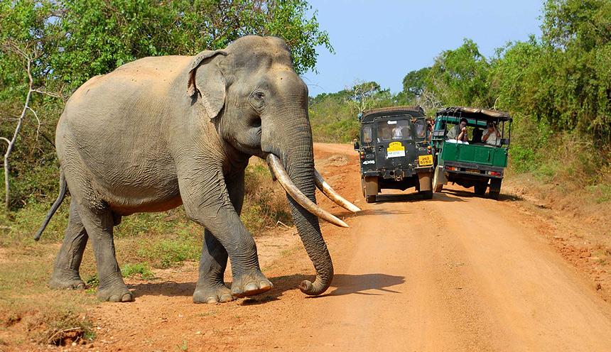 Sri Lanka eco-luxury da Galle a Pasikudha