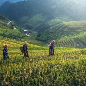 Viaggio tra le risaie di La Pan Tan