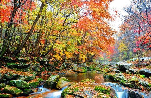 Autunno in Corea: i cinque luoghi migliori dove ammirarne i colori