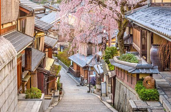 Hanami Discovery: per ammirare la fioritura dei ciliegi