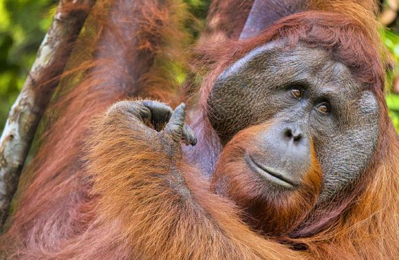 Tra oranghi e scimmie nasiche nel Parco Nazionale di Tanjung Puting