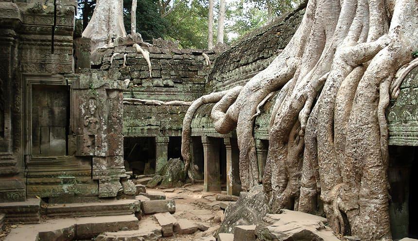 Templi immersi nella vegetazione