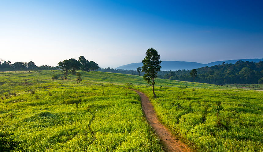 Un sentiero sterrato circondato da una vasta prateria verdeggiante e qualche albero.