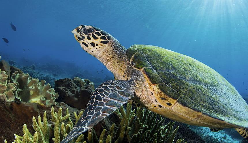 Tartaruga marina e fondale