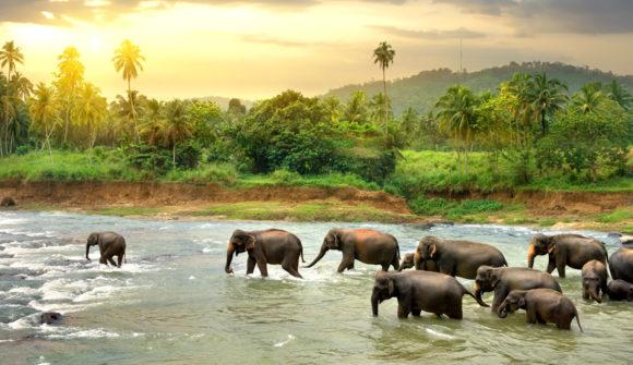 Estate in Sri Lanka: da Colombo a Passikudah