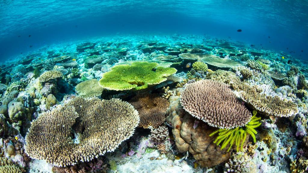 Foto subacquea con vista su numerosi coralli a riempire lo schermo