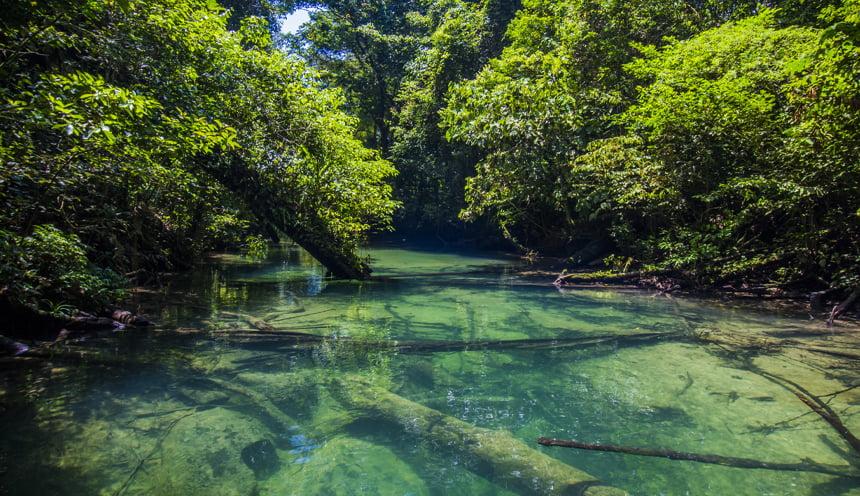 La vegetazione del parco nazionale