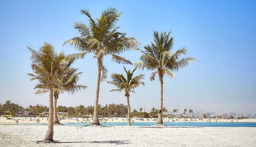 Alcune palme e una spiaggia molto piatta.