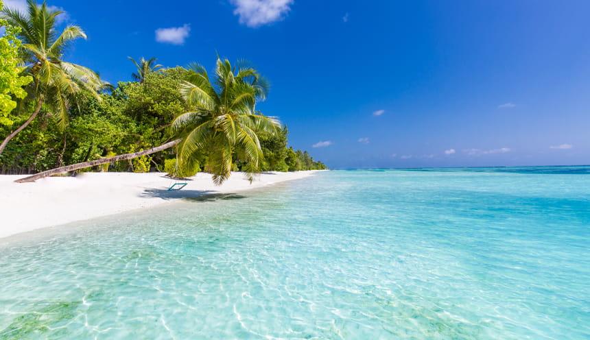 Alcune palme, una spiaggia bianca e le acque cristalline delle Maldive.